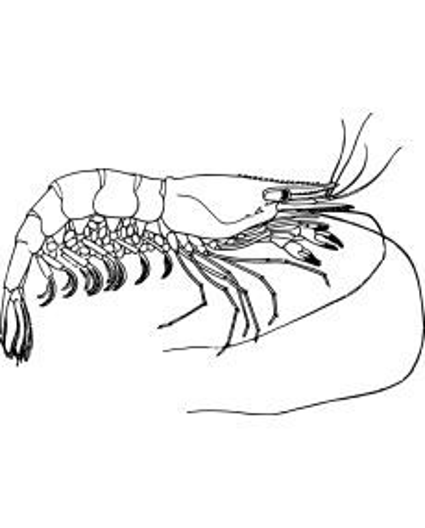 KRILL 60 capsules huileuses