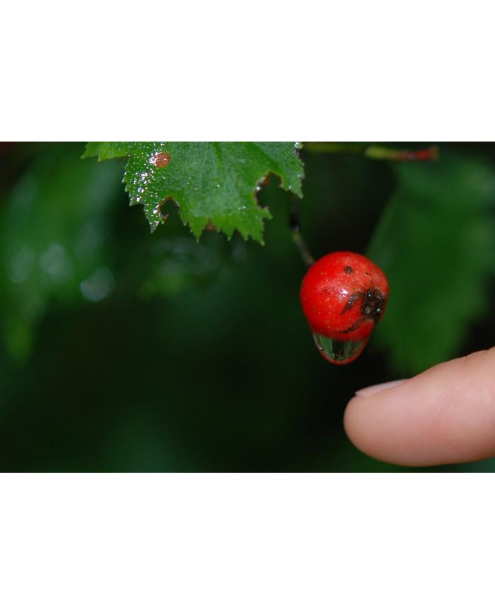 Voie Urinaire (dont Cranberry ou Canneberge...) gélules